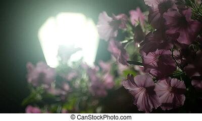 blume, nacht, stadt- licht
