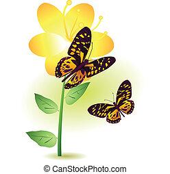 blume, vlinders, zwei