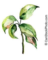 blumen-, aquarell, abbildung