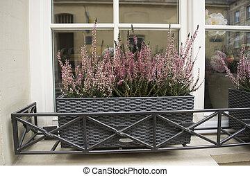 Blumen Fensterbank Dekorativ Strahlen Fensterbank Blumengebinde