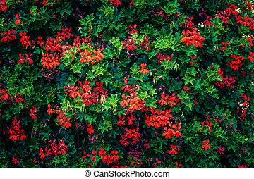 Blumen-, bunte, hintergrund
