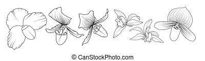 blumen-, gezeichnet, flowers., orchidee, grobdarstellung, ...