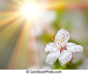 Blumen-, hintergrund, weich