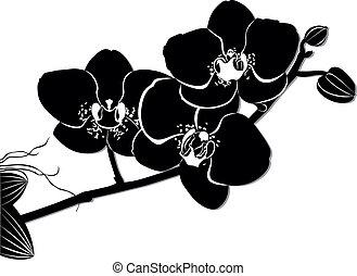 blumen, orchideen