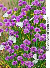 blumen, pflanze, mit, vlinders