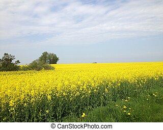 Blumen  Stockfoto - blumen, himmel, stockfoto