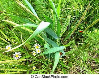 Blumen und Getreide am Wegesrand