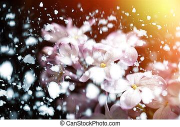 Blumen-, weich, Fokus, hintergrund