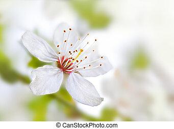 Blumen-, weich, hintergrund