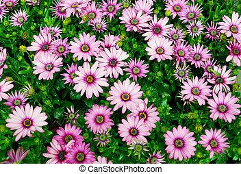 Blumen,Garten,Fr?hling, - Blumen,Pflanzen,bunt,