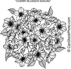 blumengebinde, von, kirsch blüte, blumen, drawing.