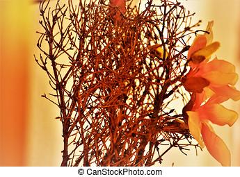 Blumen,?ste ,gelb,Orange, - makro,Blume,Kunst,