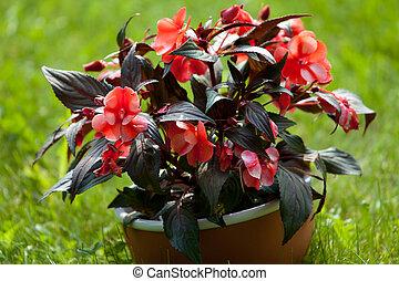 Blumentopf - Blumen