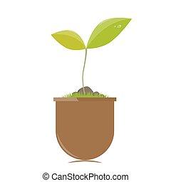 blumentopf, mit, pflanze
