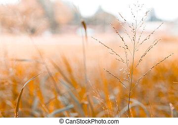 blur background of grass in the garden
