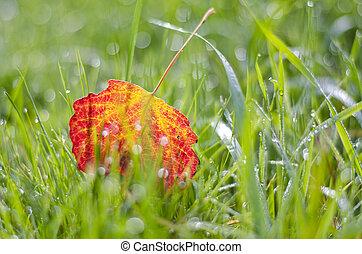 blur colorful autumn aspen tree leaf in dewy grass