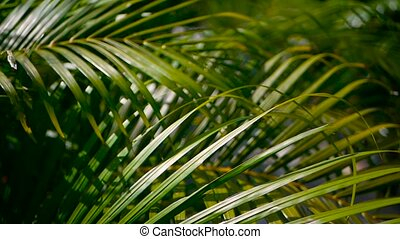 Blur tropical green palm leaf with sun light, abstract...