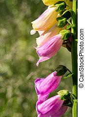 blured, fond, fleur, forêt, gentil