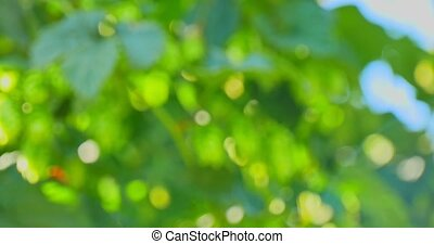 Abstract and blured green background. Breen and blue colours.