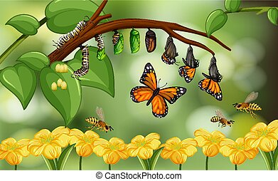 Blured nature background with life cycle of butterfly