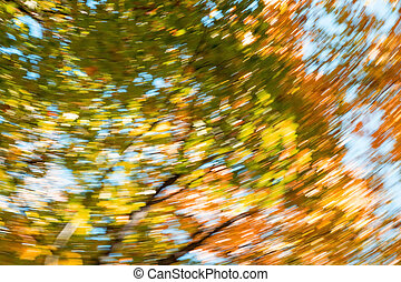 Blurred abstract background of autumn leaves on trees in motion. The concept of rotation in nature in autumn