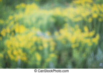 Blurred and de focused fresh yellow blossom and green grass. Defocused flowers and grass for background