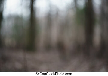 blurred background in early spring forest or park