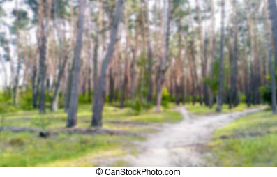 blurred background of coniferous forest