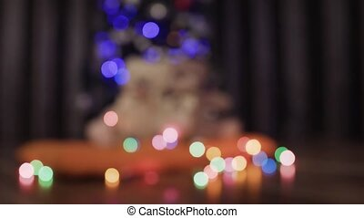 Blurred background of decorative Christmas tree, garlands and two toy teddy bears