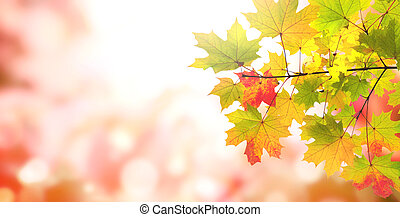 Blurred background of red, yellow, green and pink colors
