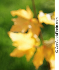 blurred background of yellow autumn leaves