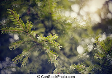 Blurred background  with fir-tree branches and bokeh