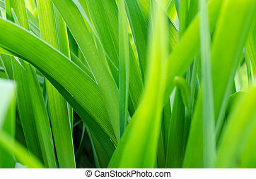 blurred background with fresh green grass