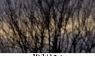Blurred Bare branches at sunset detail moved by the wind