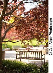 Blurred Bench and Tree Flowers