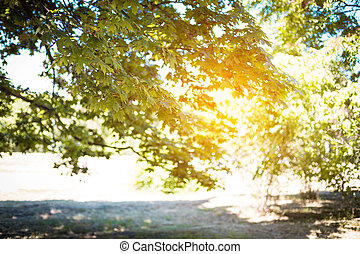 Blurred branches of a tree in the rays of the sun. Summer background