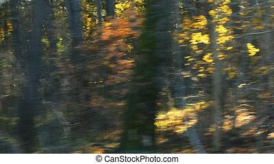 blurred car trip in sunny autumn fo
