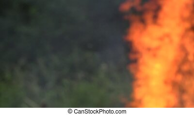 blurred fire flame make damage to forest fauna and flora...