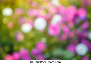 blurred floral background with bokeh