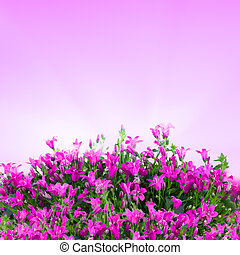 Blurred flowers background in pink sunrise light