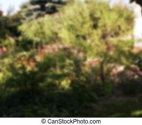 Blurred Garden