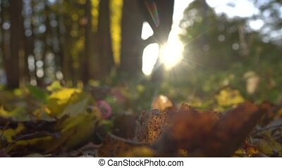 Blurred girl running on fallen leaves in sunny autumn forest. Blazing sun. Super slow motion background bokeh shot