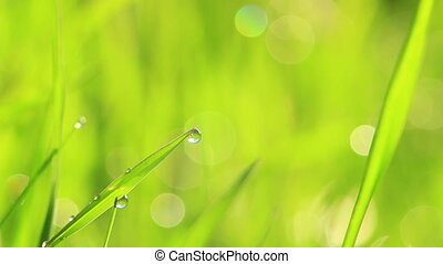Blurred grass background