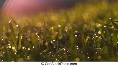 Blurred Grass Background With Water Drops