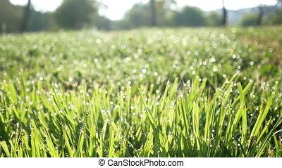 Blurred grass water drops