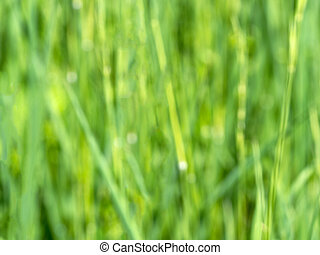 Blurred green background with grass