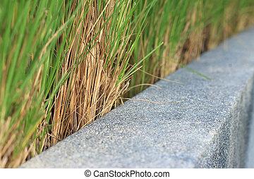 blurred green grass in garden