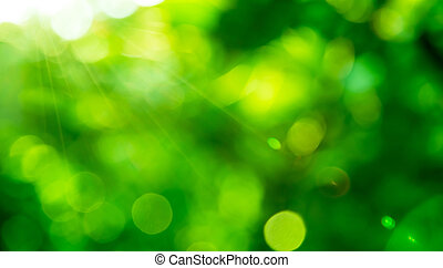 blurred green nature background with natural light