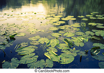 Blurred lily pads May