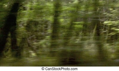 Blurred motion view forest run - Green trees - a blurred...